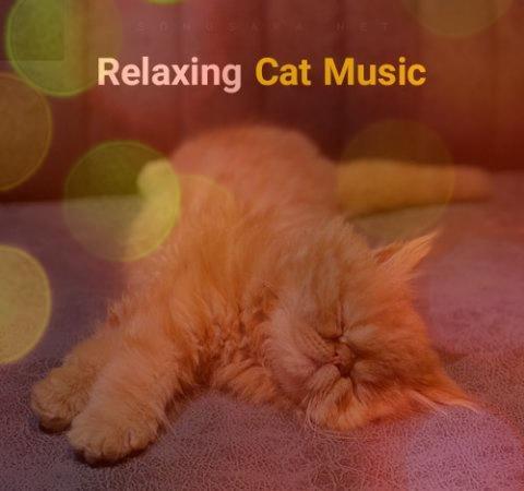 دانلود آهنگ مخصوص گربه ها